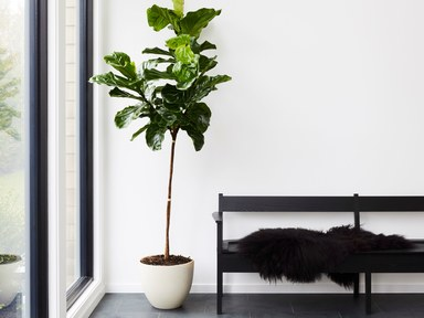 best indoor plants for apartments 8 best indoor plants u0026 how to take care of them PJLDNHT