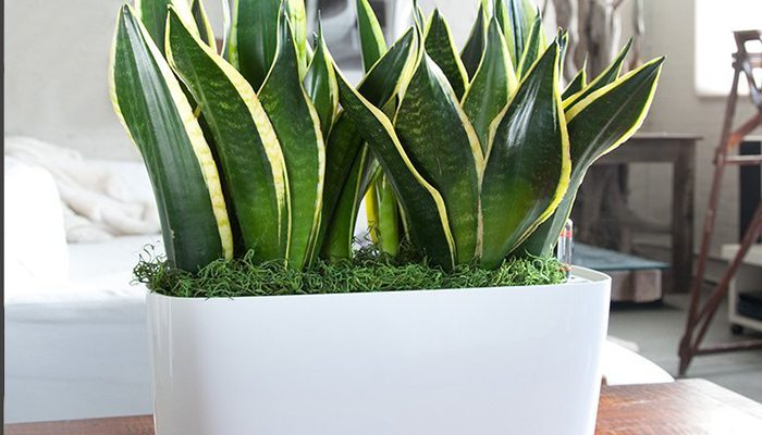 best indoor plants for apartments my plants are my children and they have been with me through SZLSTQP