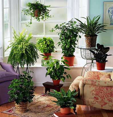 best indoor plants for apartments plants are very important to human being and plants are the source HXKJDZE