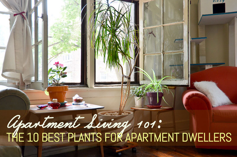 best indoor plants for apartments the 10 best plants for apartment dwellers GFXKOYP