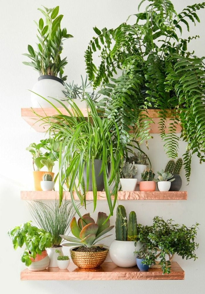 Indoor plants decoration use shelves in your home to keep the plants on it. there BOPVQUF
