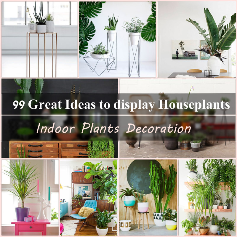 indoor plants ideas indoor plants decoration makes your living space more comfortable,  breathable, and LVQSYOA