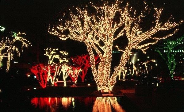 Best Outdoor Led Christmas Lights Ask What Are The Best Lights For