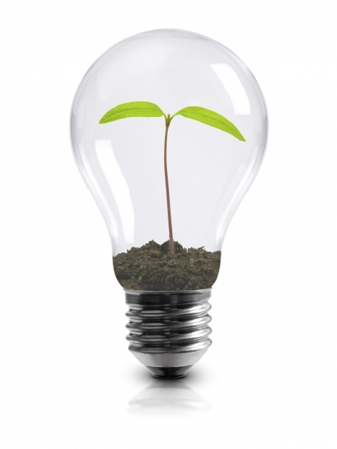 Best Plant Light Bulbs Designs Plant Light Bulbs Ideas Lighting Cfl