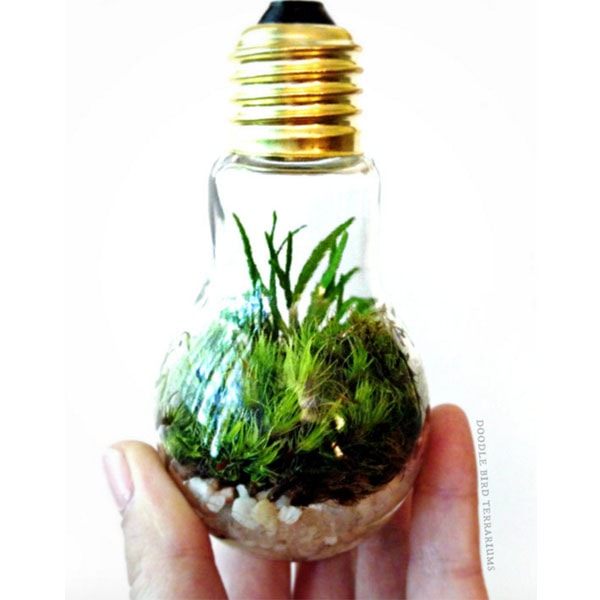 Plant Light Bulb 75 Best Light Bulb Ideas Images On Pinterest Light