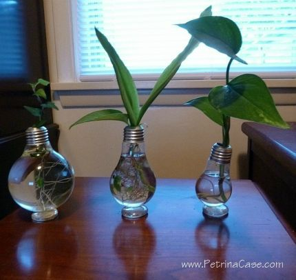 Plant Light Bulbs Ideas